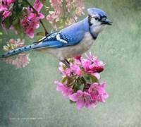 Bluejay Amid Blooms Fine-Art Print