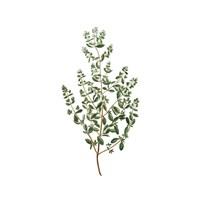 Herbs square 2 Fine-Art Print