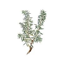 Herbs square 3 Fine-Art Print