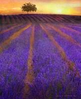 Orange Rows Lavender Fine-Art Print