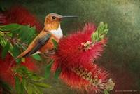 Red Bloom Hummingbird Fine-Art Print