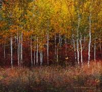 Aspen Forest Near Kelly WY Fine-Art Print