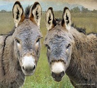 Cute Donkeys Fine-Art Print