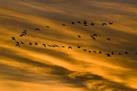 Early Morning Bosque Del Apache New Mexico Fine-Art Print