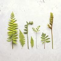 Flat Lay Ferns III Fine-Art Print