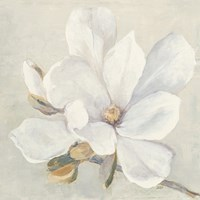 Serene Magnolia Fine-Art Print