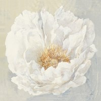 Serene Peony Fine-Art Print