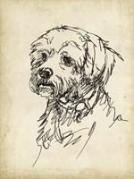 Breed Studies III Fine-Art Print