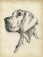 Breed Studies VI Fine-Art Print