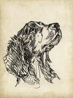 Breed Studies VII Fine-Art Print
