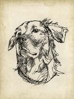 Breed Studies VIII Fine-Art Print