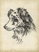 Breed Studies XI Fine-Art Print
