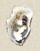 Oyster Shell Study I Fine-Art Print