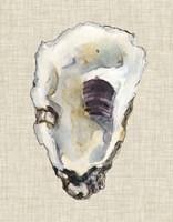 Oyster Shell Study III Fine-Art Print