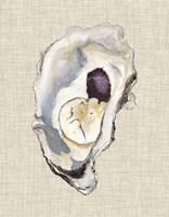 Oyster Shell Study IV Fine-Art Print