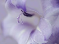 A Gift in Purple I Fine-Art Print