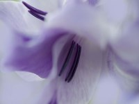 A Gift in Purple III Fine-Art Print
