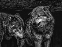 Wolfpack Black & White Fine-Art Print