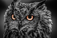 Wise Owl 5 Black & White Fine-Art Print
