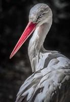 The Stork 7 Fine-Art Print