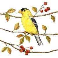 Birds & Berries II Fine-Art Print