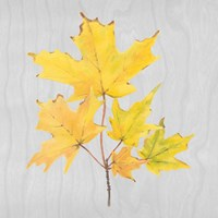 Autumn Leaves II Fine-Art Print