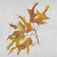Autumn Leaves III Fine-Art Print