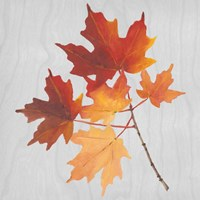 Autumn Leaves IV Fine-Art Print