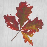Autumn Leaves V Fine-Art Print