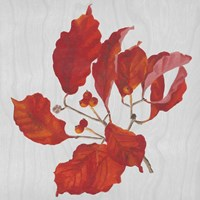 Autumn Leaves VI Fine-Art Print