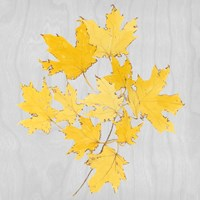 Autumn Leaves VII Fine-Art Print