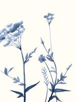 Indigo Wildflowers I Fine-Art Print