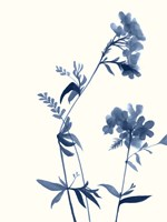 Indigo Wildflowers II Fine-Art Print