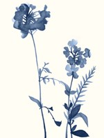 Indigo Wildflowers V Fine-Art Print
