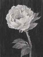 Black and White Flowers II Fine-Art Print