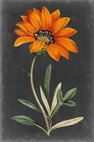 Dramatic Floral I Fine-Art Print