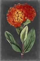 Dramatic Floral II Fine-Art Print