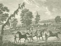 Equestrian Scenes III Fine-Art Print