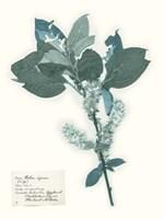 Pressed Flowers in Spa I Fine-Art Print