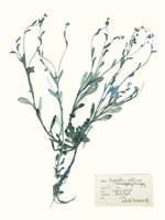 Pressed Flowers in Spa II Fine-Art Print