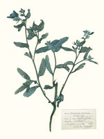 Pressed Flowers in Spa III Fine-Art Print