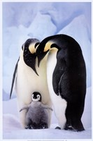 Penguin Family Portrait Fine-Art Print