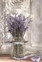Lavender Bench Fine-Art Print