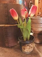 Tulip Simplicity Fine-Art Print