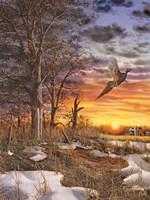 Autumn Ringneck Fine-Art Print