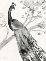 Majestic Peacock Fine-Art Print