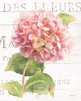 Maison des Fleurs VII Fine-Art Print