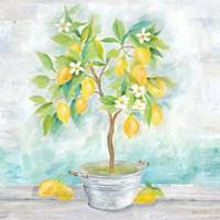 Country Lemon Tree Fine-Art Print