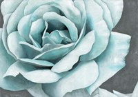 Rose Bloom Fine-Art Print