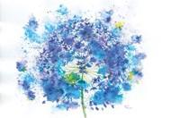 Blue Allium Fine-Art Print